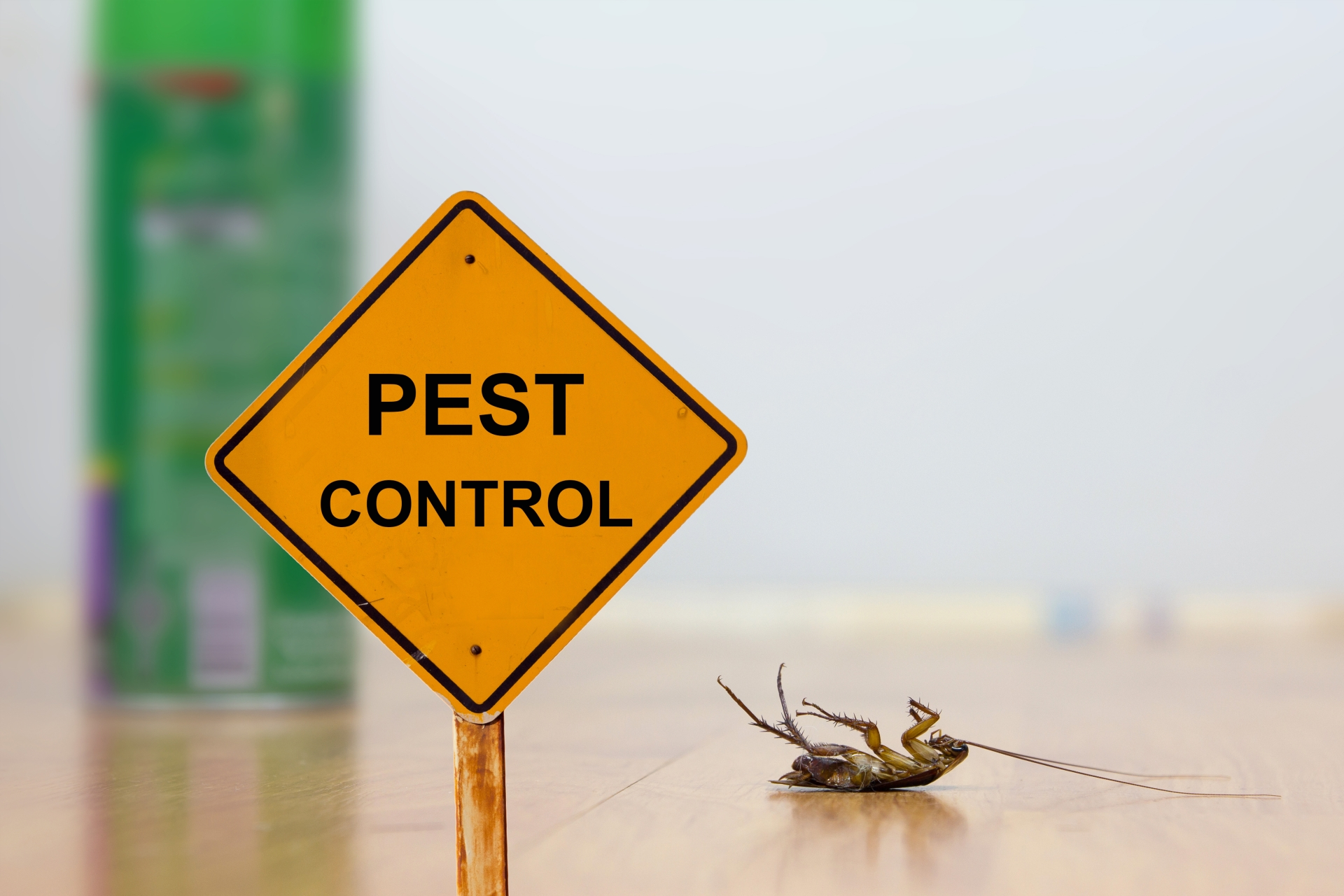 24 Hour Pest Control, Pest Control in Canning Town, North Woolwich, E16. Call Now 020 8166 9746